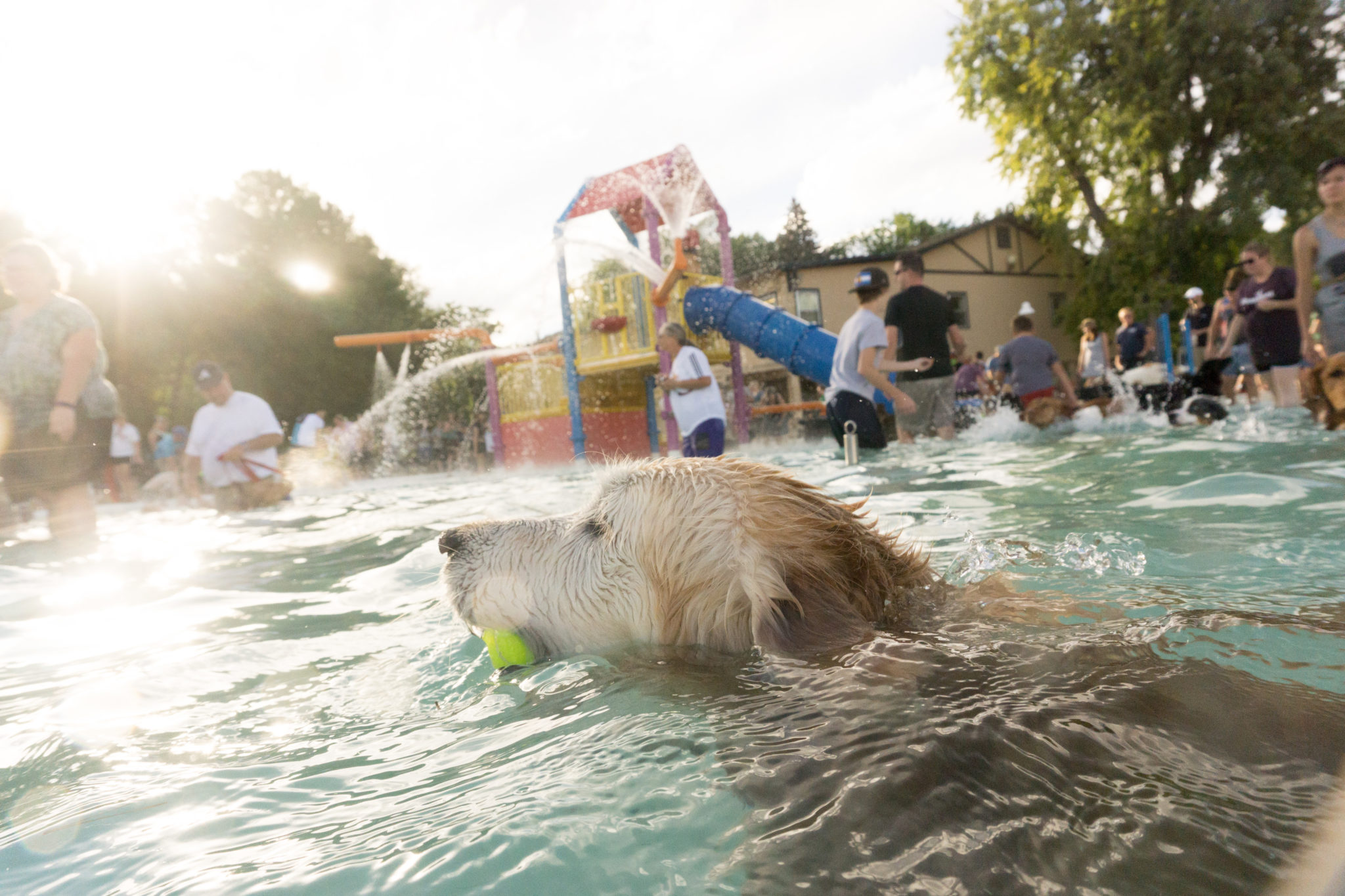 dogs swimming at city park pool, pooch pluunge