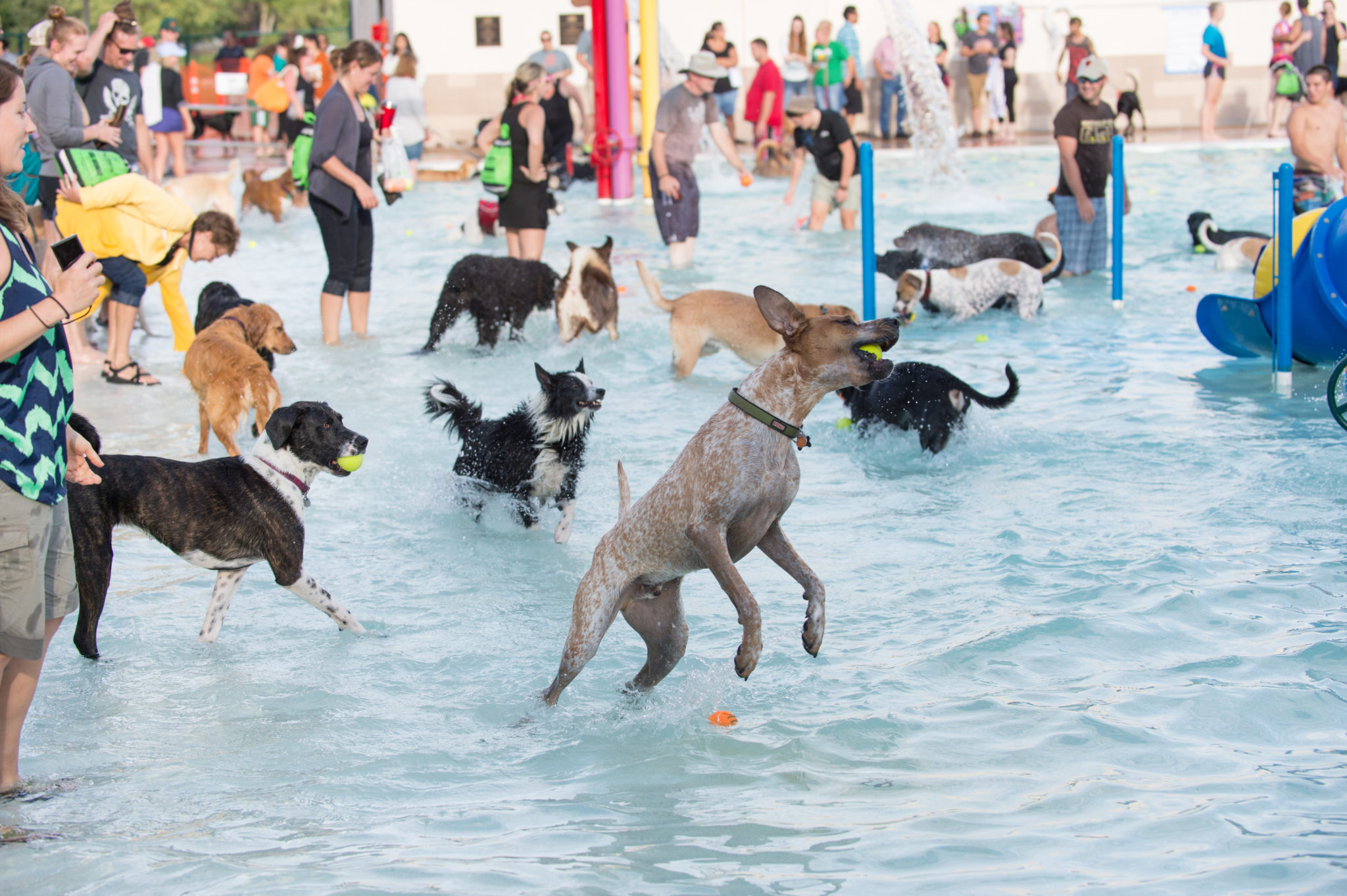 pooch plunge, dogs playing in water