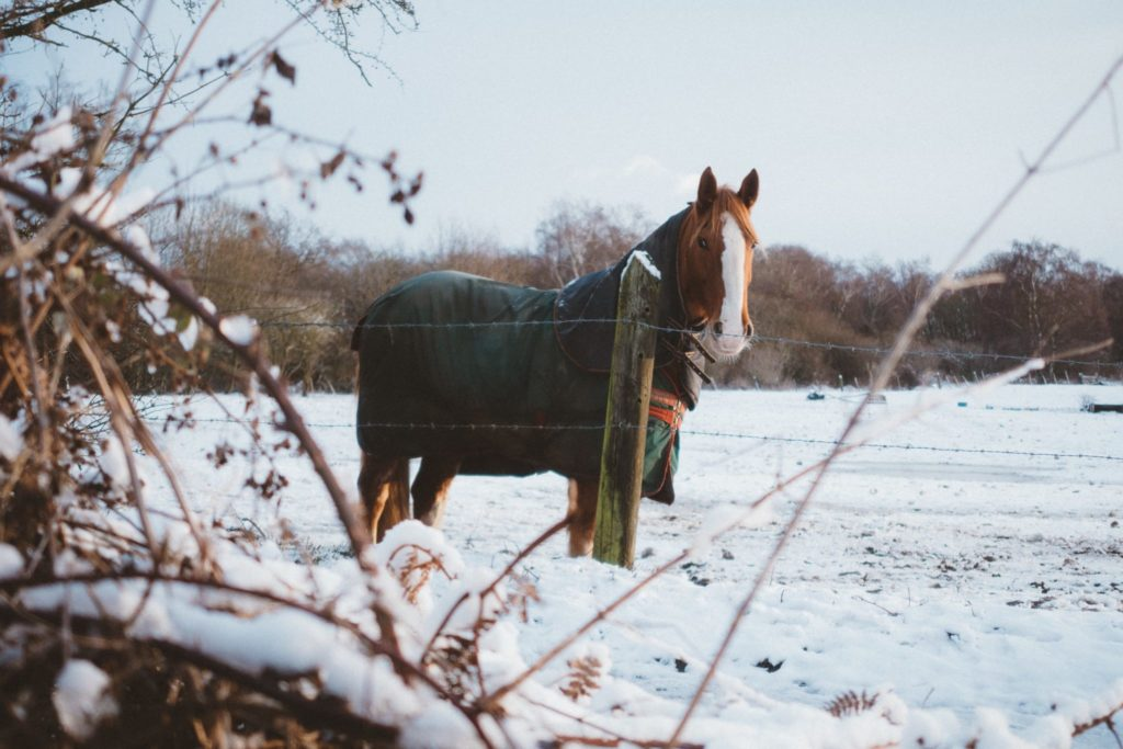 Picture of horse wearing a blanket in the snow