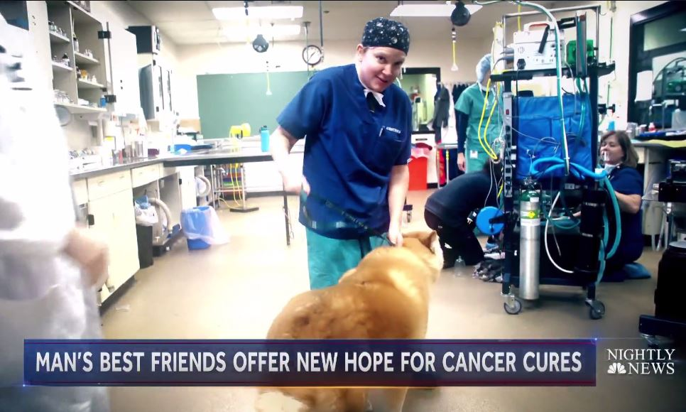 veterinary technician with dog in anesthesia room