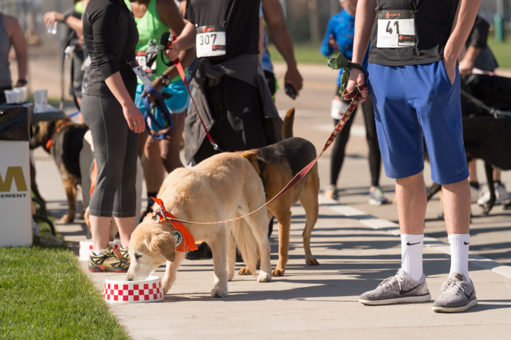 Dog drinking water from a dog bowl at the Fast and Furriest 5K