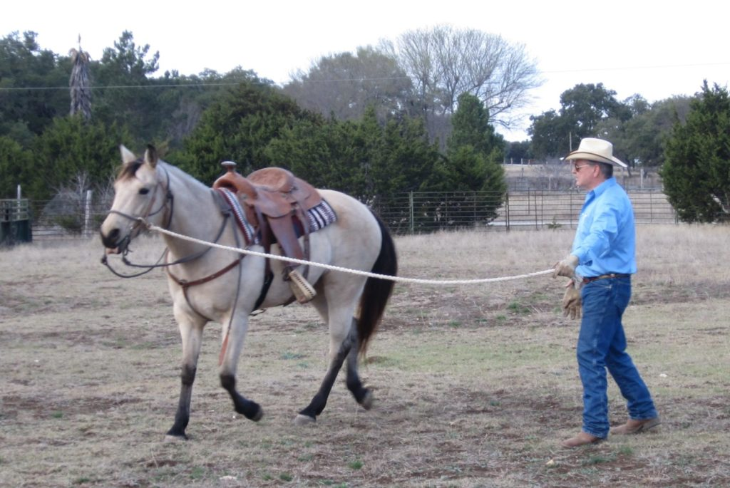 man leading a horse by a rope