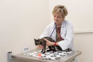Dr. Rebecca Ruch-Gallie examines a rescue kitten