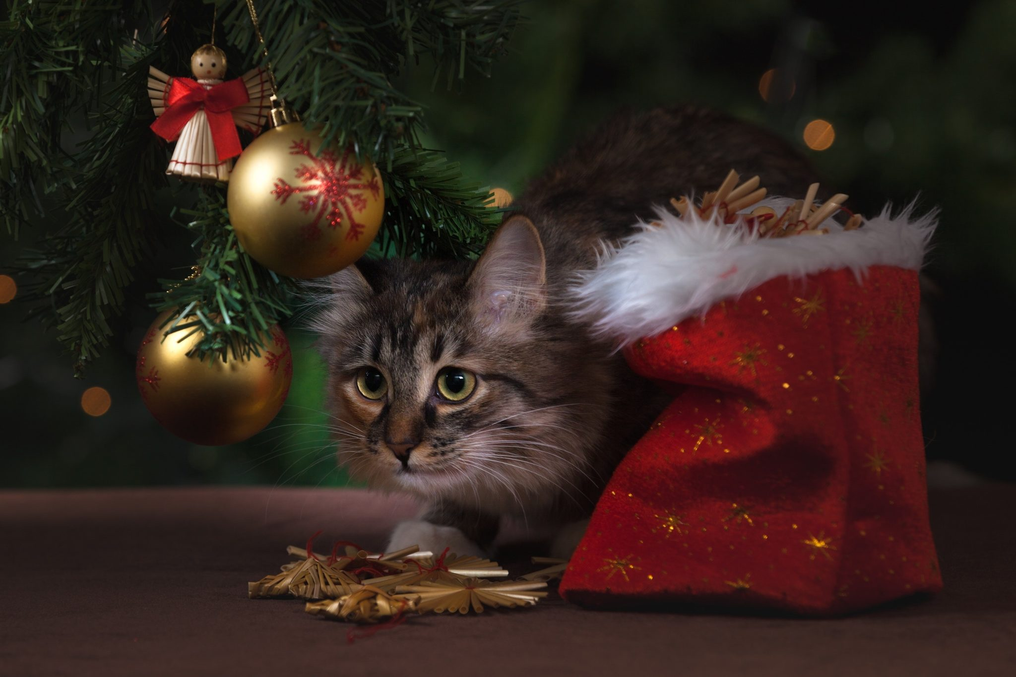 A cat sits under a decorated holiday tree