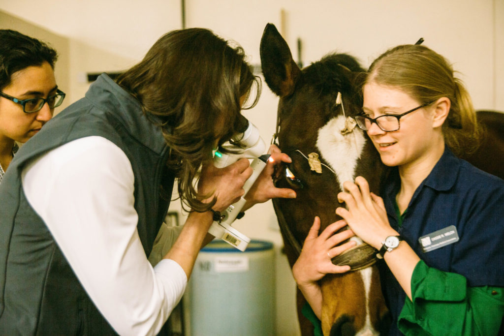 10:26 a.m.   Veterinary student Cassie Welch gives Wallandro calming muzzle scratches as veterinary ophthalmologist Dr. Kathryn Wotman performs an eye exam on an infected corneal ulcer.