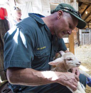 veterinarian holding a lamb