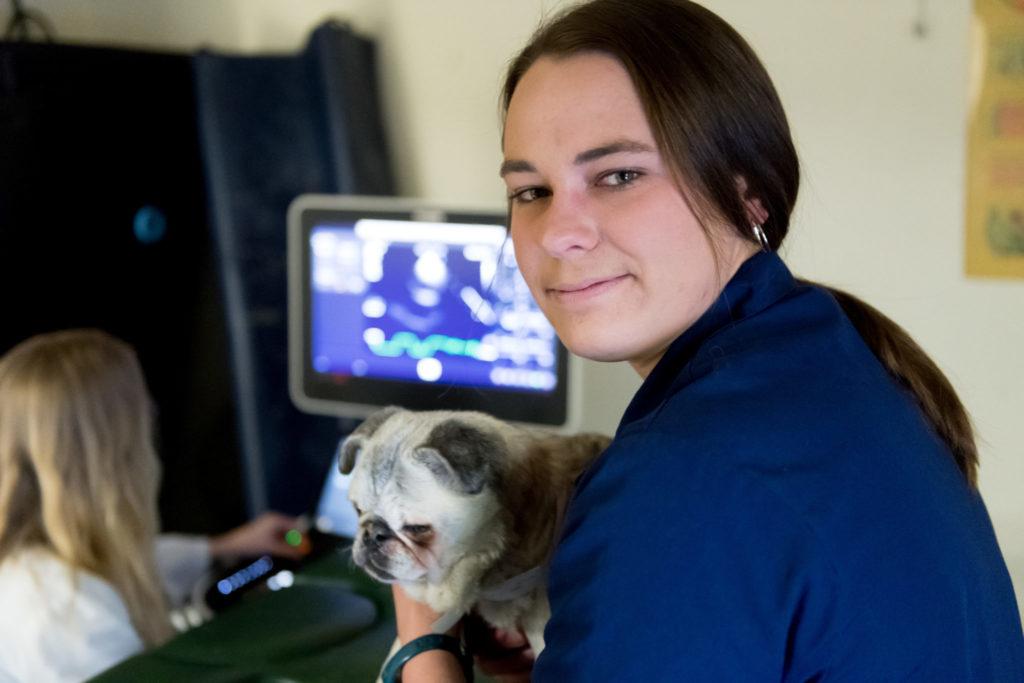Elizabeth Millman, 3rd year DVM Student in the CSU/Alaska Fairbanks program, assists with an echo cardiogram at the James L. Voss Veterinary Teaching Hospital. February 28, 2018