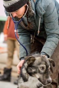 veterinary student Claire Squires examines a dog