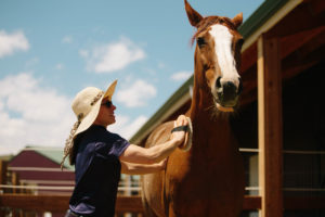 woman brushing horse