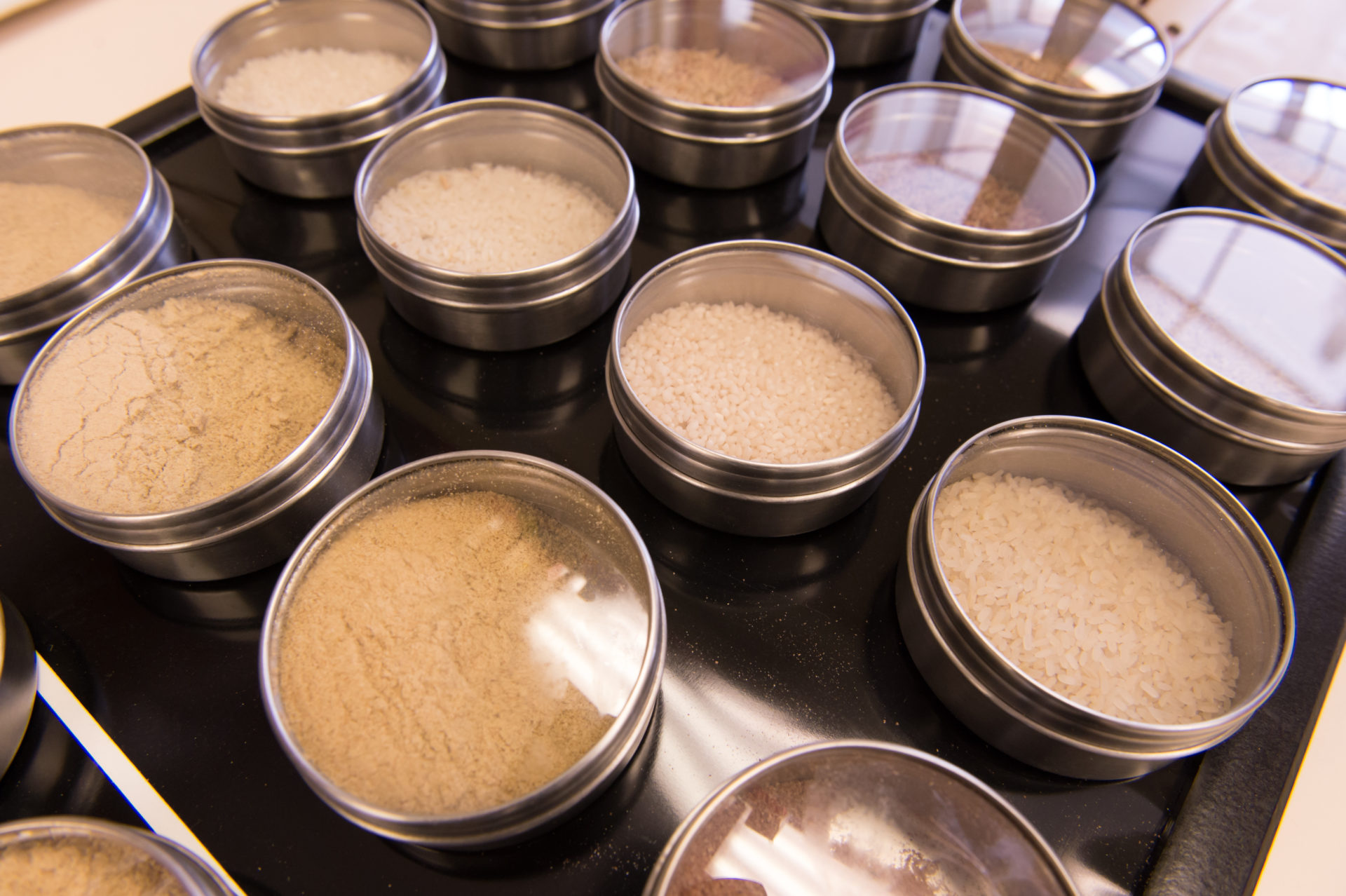 rice samples in the lab of Elizabeth Ryan at Colorado State University