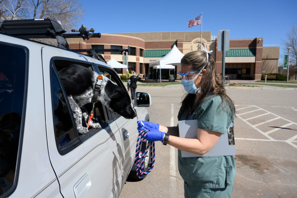 dog in car with vet tech