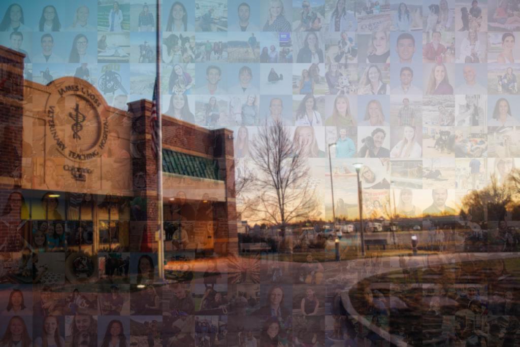 DVM 2020 mosaic photo