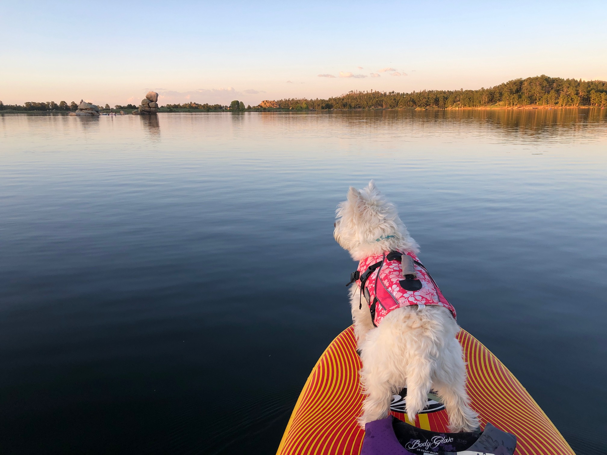dog on paddle board