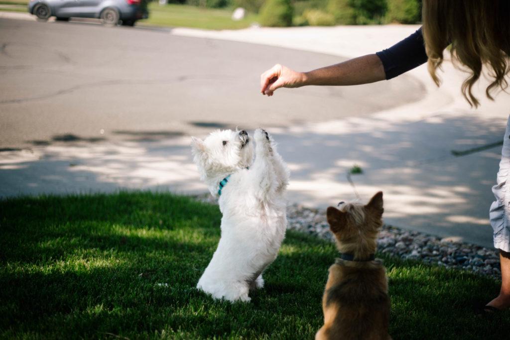 dog doing trick