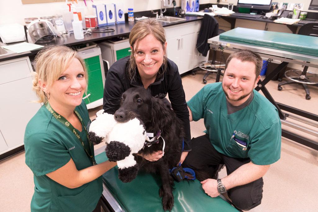 veterinary oncology nurses Alexa Pickles, Jhoni Sorenson and Lucas Bisel