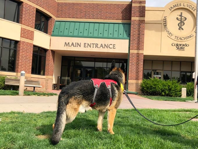 dog in front of hospital
