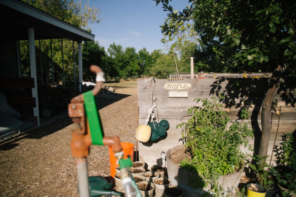 Dr. Steve Withrow's garden