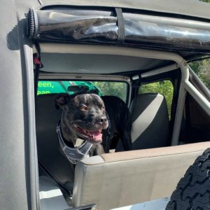 Banjo, a cancer patient at CSU's animal cancer center, is ready to go for a ride