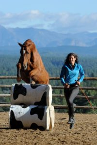 horse jumps obstacle next to horse trainer
