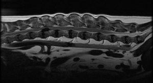 MRI image of a dog's spine