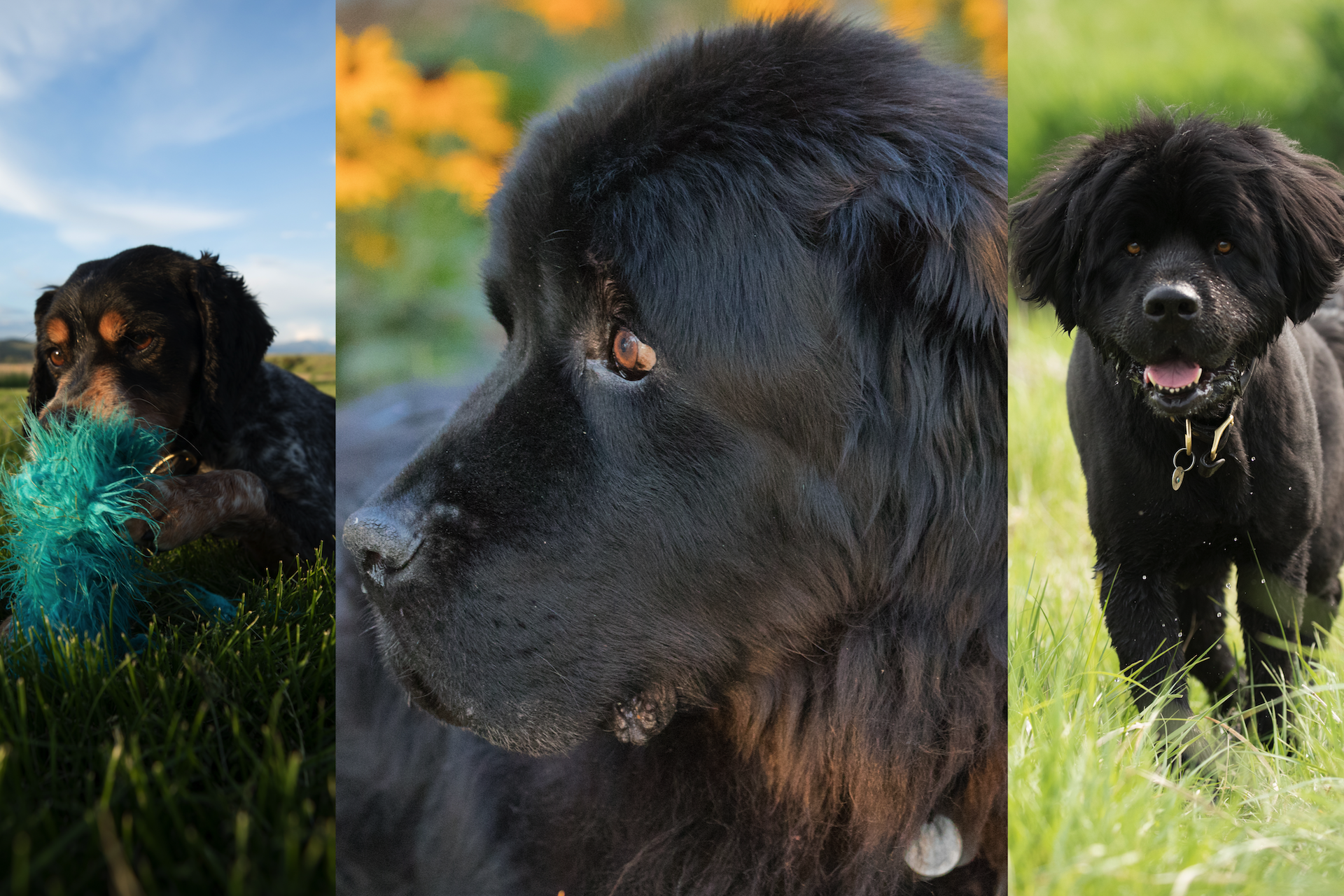 The donor's dogs (left to right): Tiny, Lefty, Finn. Photos courtesy of Dr. Felix Duerr.
