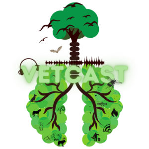 illustrated tree with lungs, title vetcast