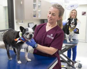 Dr. Kate Creevy examining a dog