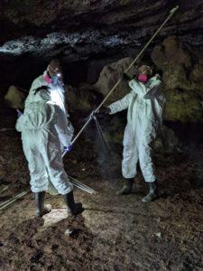 three scientists catch bats in mist net