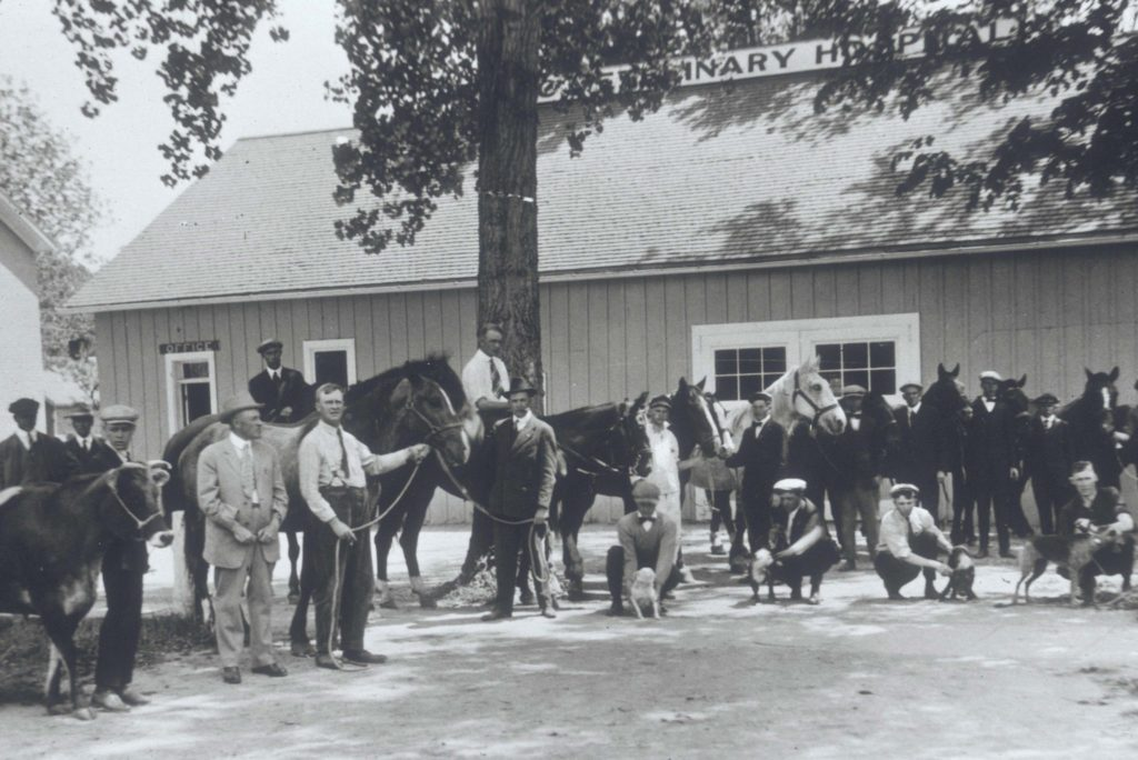 vintage photo of veterinarians and horses outside hospital