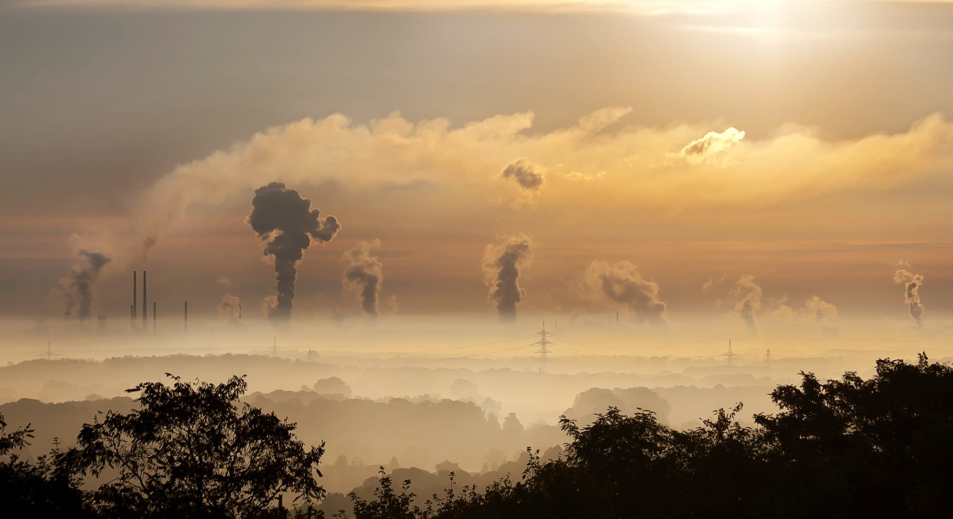 silhouette of trees with pollution in the background